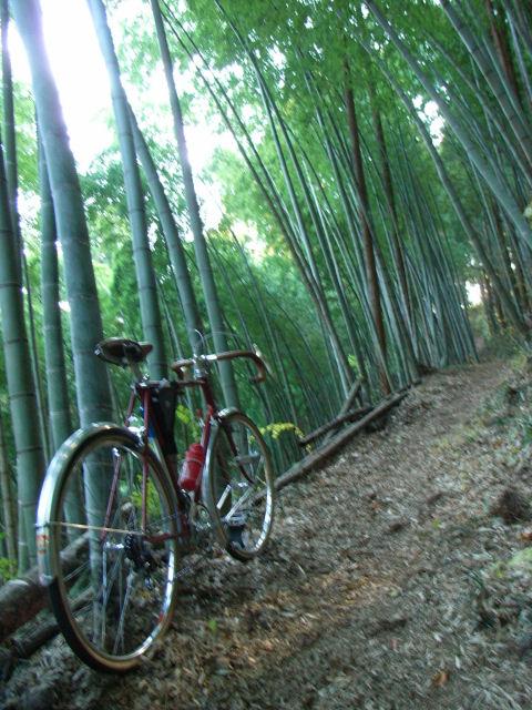 大久保峠への竹林